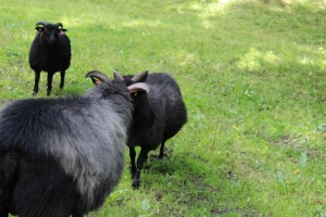 Livestock grazing:)